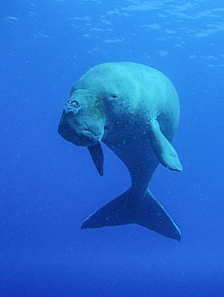 new_project_dugong
