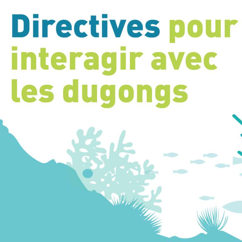 Image for guildeleins for interacting with French dugongs